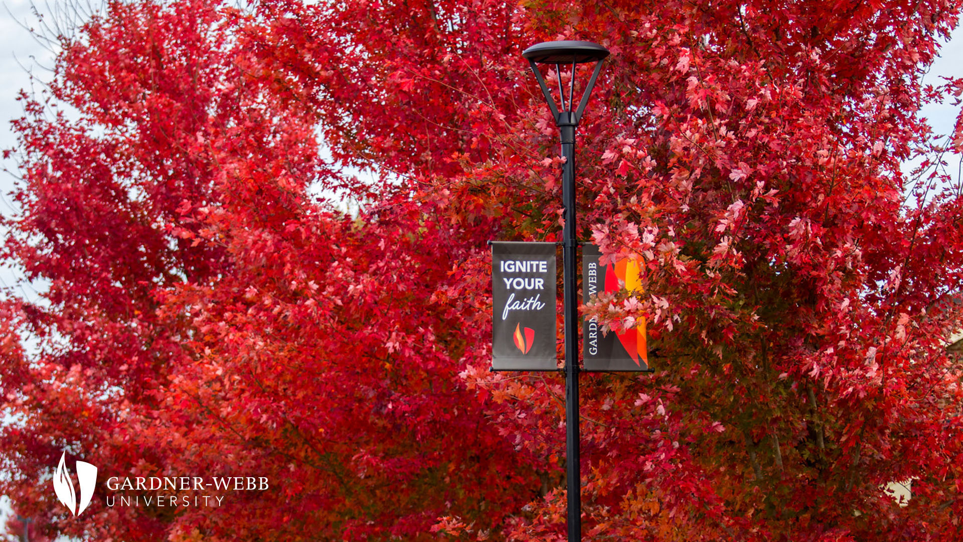 Zoom Background - Banner with red leaves
