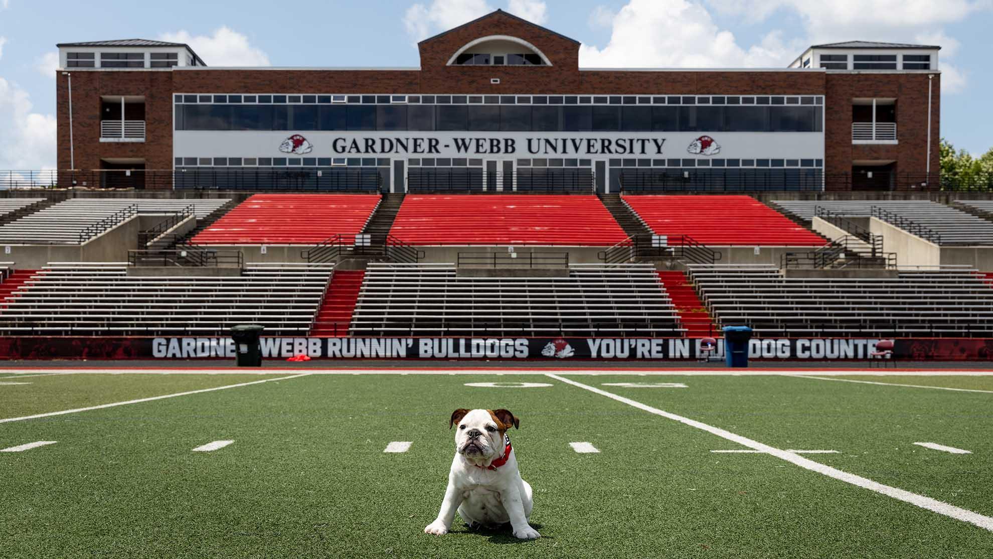 Bo the Bulldog in the football stadium